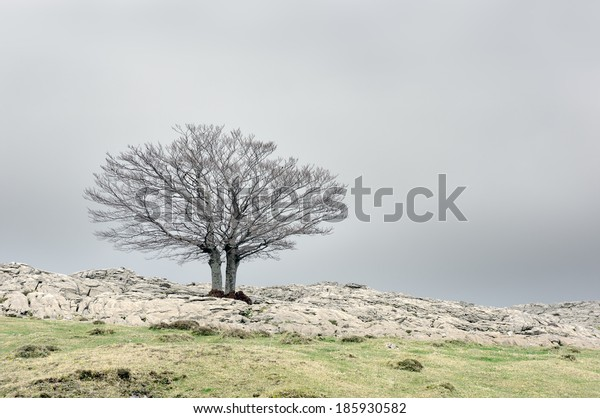 solitary tree with copy space