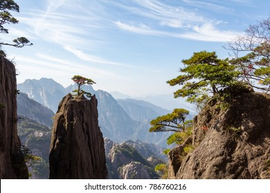 Solitary tree in the Grand Canyon of the West Sea on Mt Huangshan (Yellow Mountain), Anhui, China. Mount Huangshan is one of the most famous of China, and has inspired hundreds of poets and painters