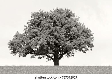 A solitary tree in a grassfield