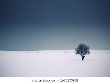 Solitary tree in a grey landscape with snow and a dark sky
