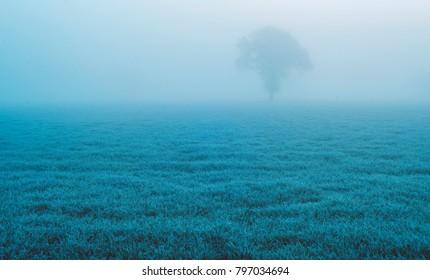 Solitary tree in misty meadow. Achterhoek, Gelderland, Netherlands.