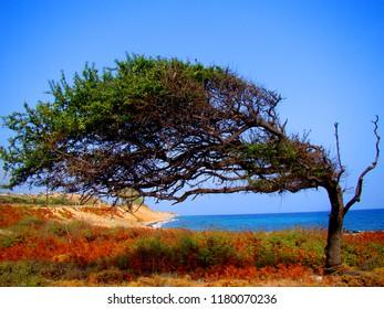 Solitary tree on beach from Samothraki Island, Greece