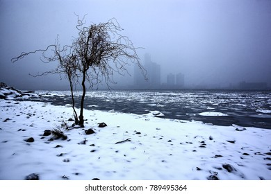 Solitary Tree on the Detroit River waterfront in winter, December 24 2017