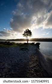 Solitary tree on a lake shore