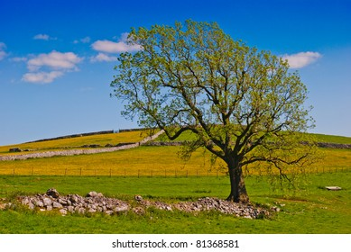A solitary tree on a rural farming background