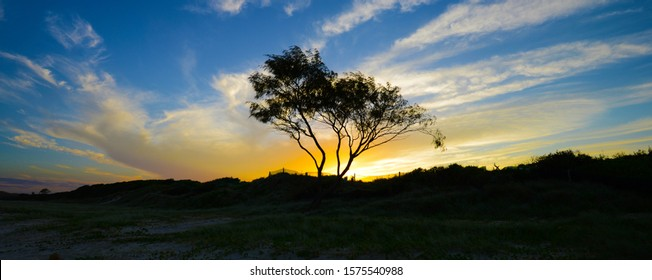 Solitary tree On Tallow Beach,Byron Bay,Australia