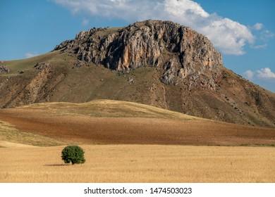 Solitary tree under rocky hill,anatolia-turkey