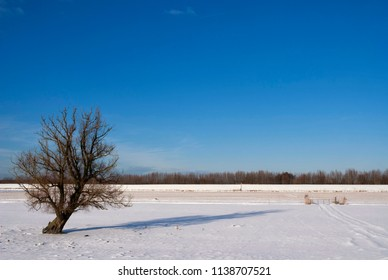 Solitary tree in a winter landscape in the Dutch national park the Biesbosch