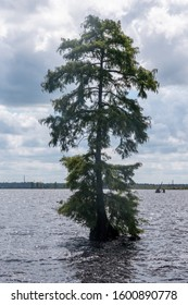 Solitary trees in the lake at the Great Dismal Swamp in Virginia