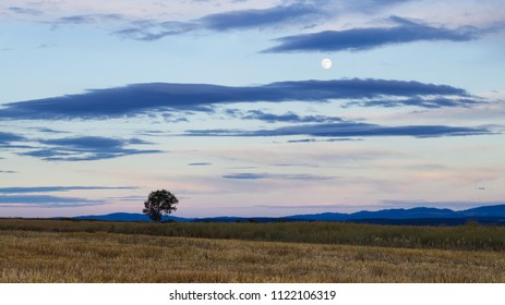 Solitude tree at countryside horizon and full moon on sky, rural scene. Landscape with beautiful skyline