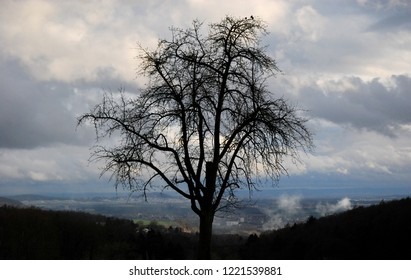 Solitude tree on a hill in front of an early spring landscape