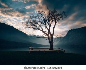Solitude tree at sunset. Amazing view of Lake Bohinj.