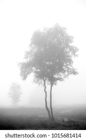 Solitude trees in a misty landscape