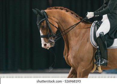 SOLNA, SWEDEN - NOV 25, 2016: Malin Rinne at the Dressage event in the Sweden International Horse Show at Friends arena.