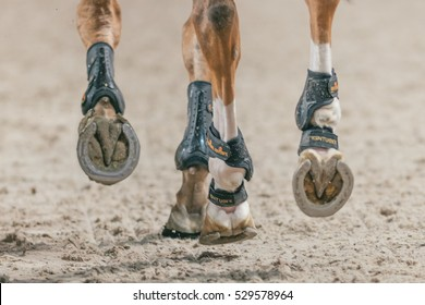 SOLNA, SWEDEN - NOV 27, 2016: Horse shoes and legs at the Sweden Masters Last Man Standing in the Sweden International Horse Show at Friends arena.