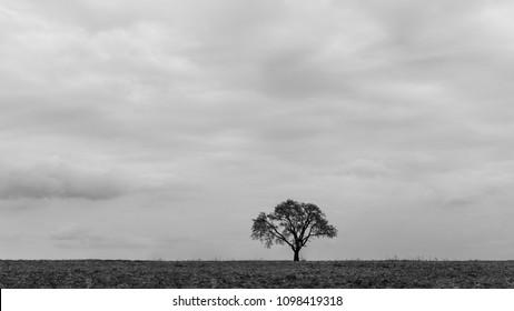 Solo tree in a field near Košice, Slovakia