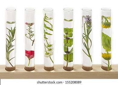 solution of medicinal plants and flowers - Decorative Objects-