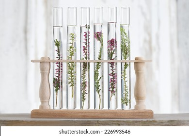 solution of medicinal plants and flowers - Decorative Objects-flowers in test tubes