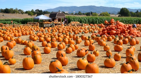 Solvang, California, USA - September 29, 2012: A colorful roadside pumpkin patch in a small rural community in Santa Barbara County, California.