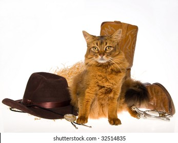 Somali cat with cowboy props on white background