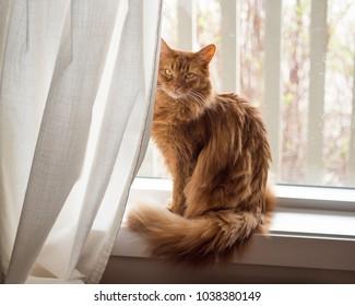Calm Cat Images Stock Photos Amp Vectors Shutterstock