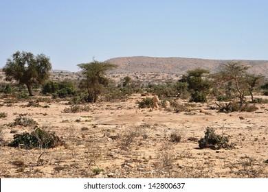 Somali ladscape