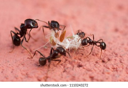 some ants cooperating to carry food