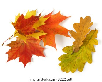 some autumnal maple and oak leaves on white