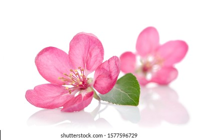 some beautiful pink flowers isolated on white background