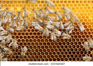 some bees are on a bees wax in a bee hive