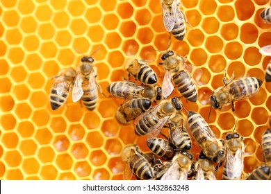some bees are working on a new honey reserve