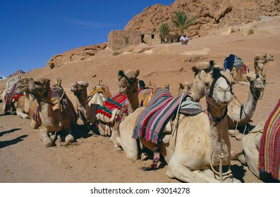 Some camels of mountains sitting on a background