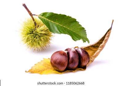 some chestnuts, chestnut hedgehog and foliage isolated from the white background