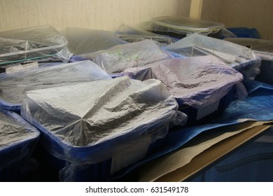 Some days old ornamental flower seedlings growing under polyethylene covering in containers