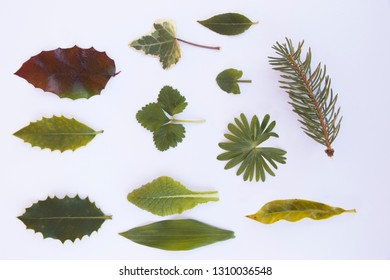 some different isolated leaves on a white background