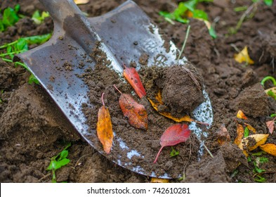 Some dirt and red fallen leaves on a garden shovel, close-up shot.