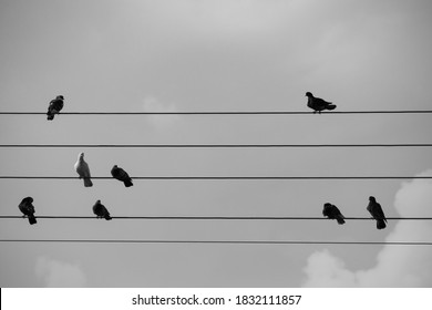 Some doves on Electricity power wires like as a musical pentagram
