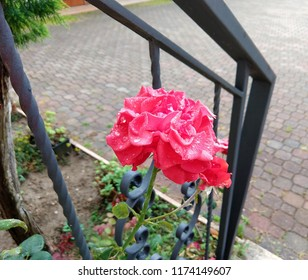 Some drops of water are on the petals of the rose. The flower with a green stem is near an iron staircase and in front of a garden.