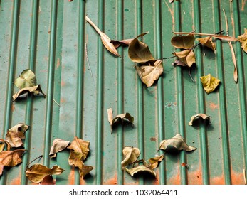 Some of dry leaf on green zinc roof.