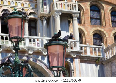 some of the famous pidgeons of Saint Mark's Square