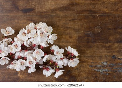 Some flowering twigs of plum tree on wooden background. Space for text