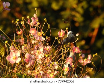 Some flowers under the rays of the morning sun,