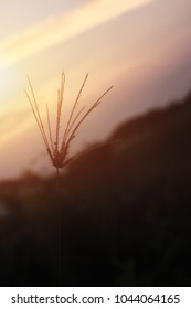 Some focus and closeup Silhouette of the grass flower with light sun or Shadow of the grass and blur sunlight background