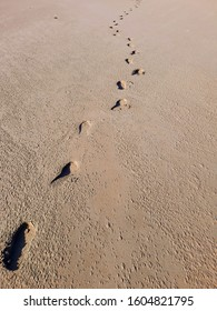 Some footprints in the sand