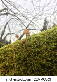 Some fresh mushrooms