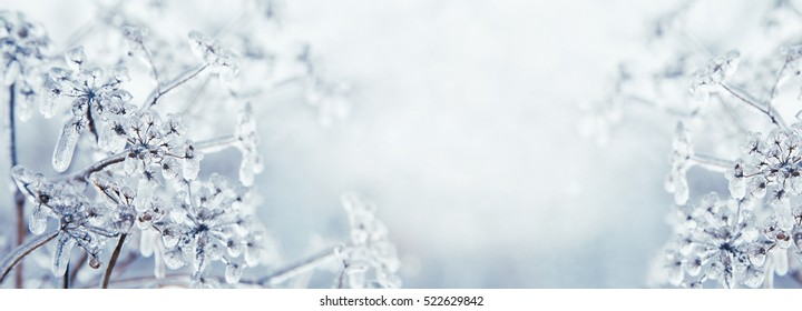 Some frozen beautiful aise-weed plants covered with icicles. Winter background. Free space for text. Selective focus. Shallow depth of field. Toned.