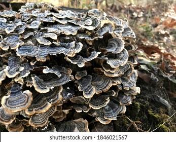 Some fungus I saw on a hike.