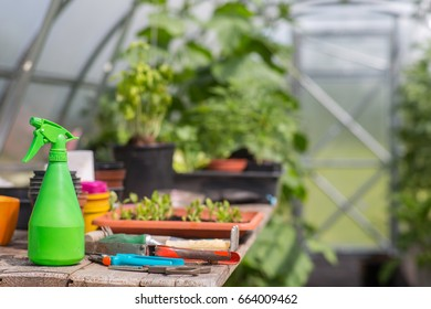 Some gardening tools on a table in a greenhouse.