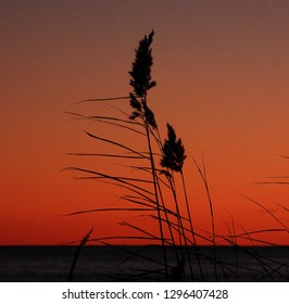 Some grass in a colourfull sunset. Gotland
