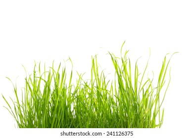 some grass isolated on white